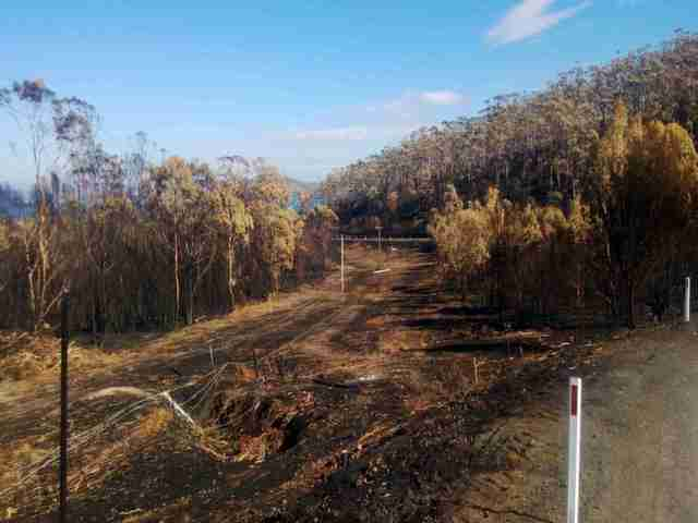 clean up after bushfires