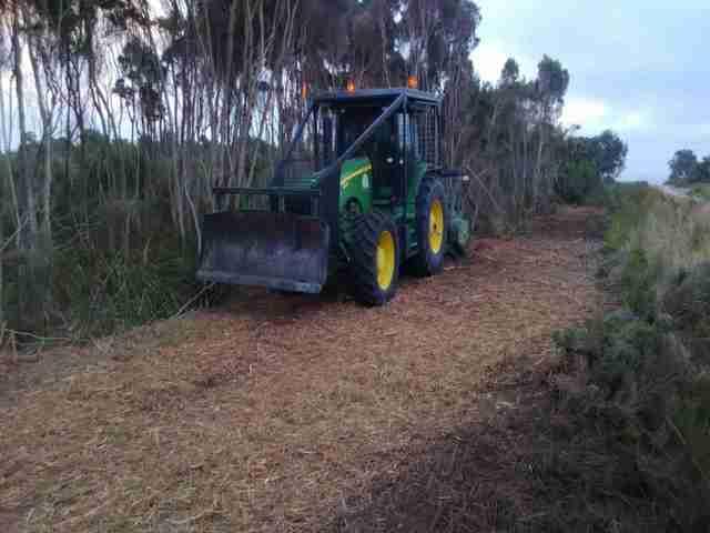 tea tree mulching_2