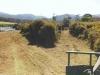 gorse mulching